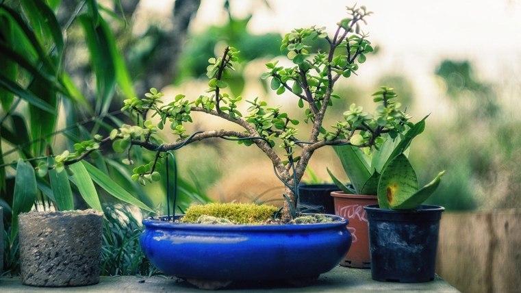 bonsai-cables-cobre-pequeno
