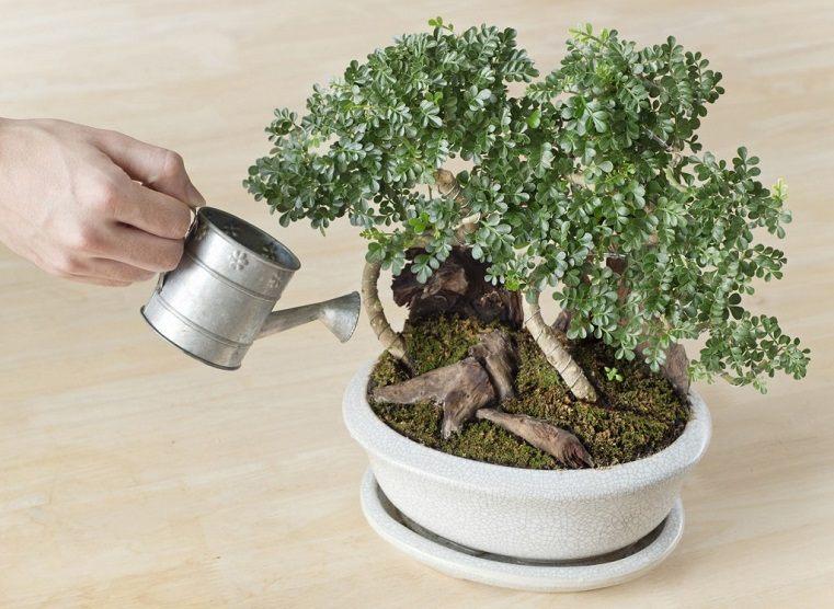 bonsai riego estilo plantas