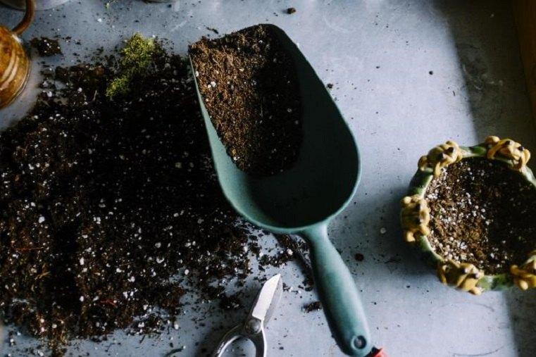 bonsai sustrato rocas pequenas