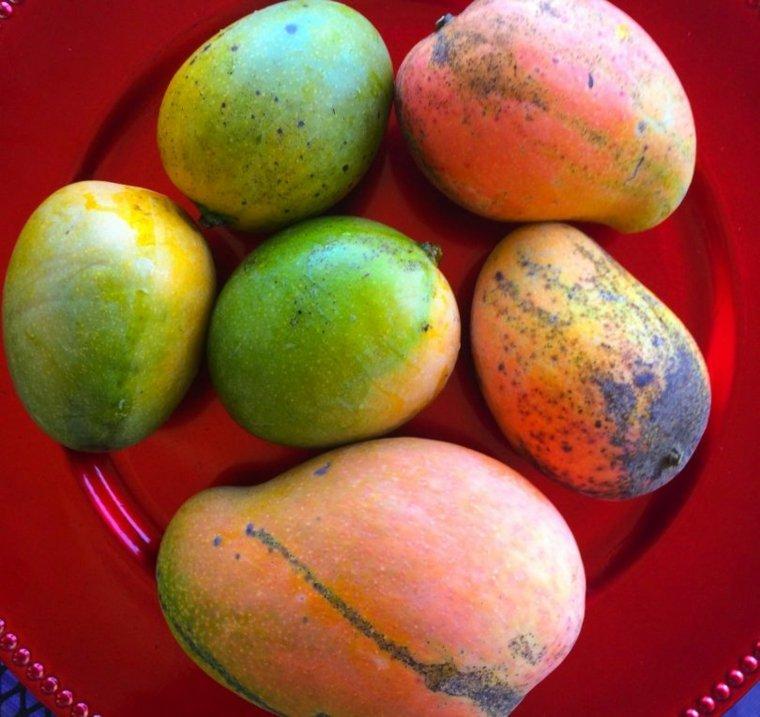 frutas mangos
