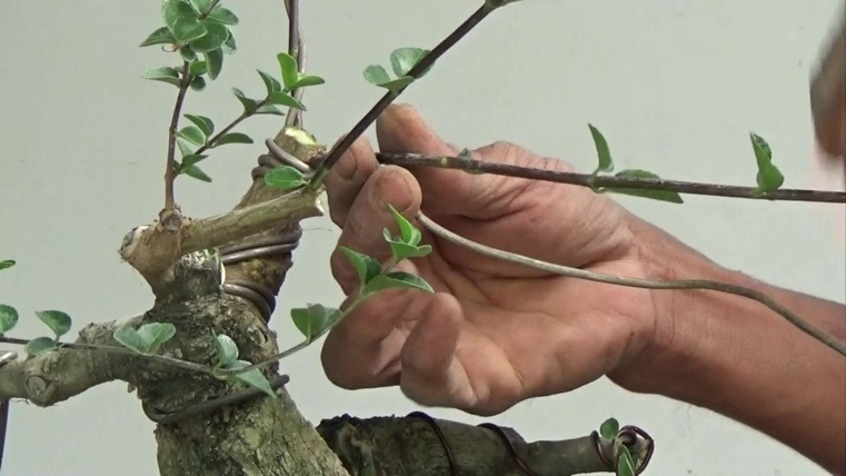 efecto-formas-cableado-plantas
