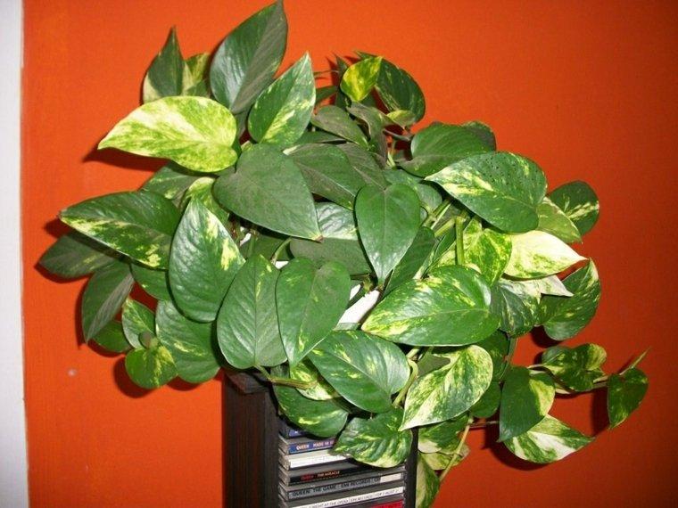 el cuidado de las plantas-resistentes-potus
