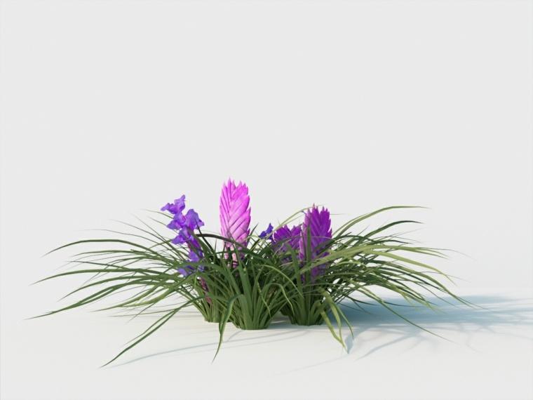 el cuidado de las plantas-tillandsia