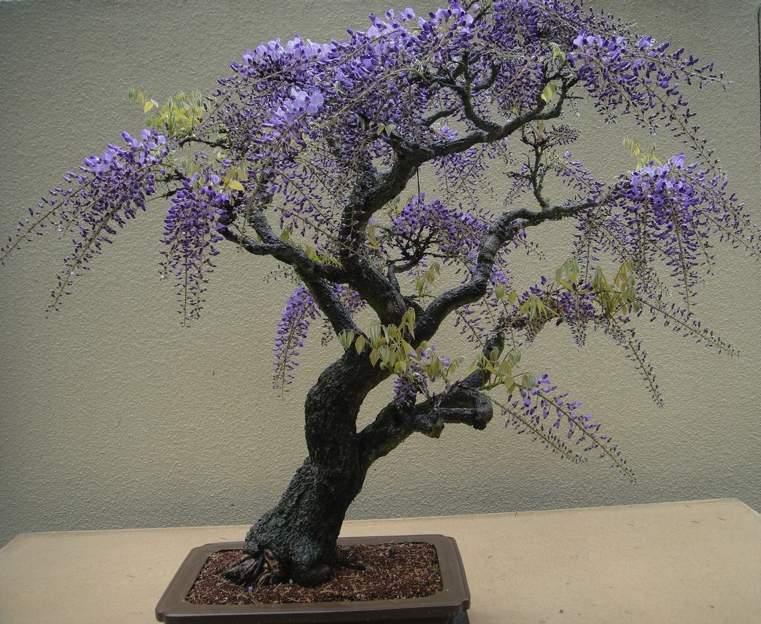 elegante-estilo-fresco-bonsai