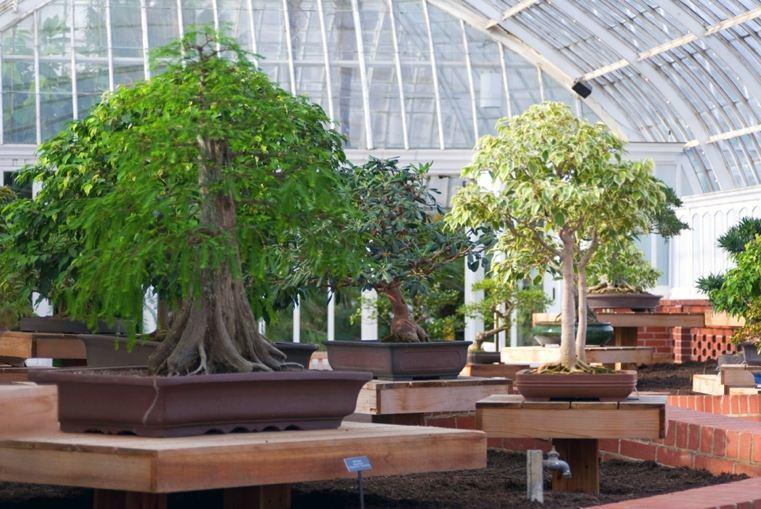 estilos-plantas-jardines-exteriores