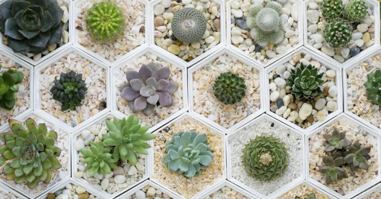 fotos de plantas-crasas-interiores