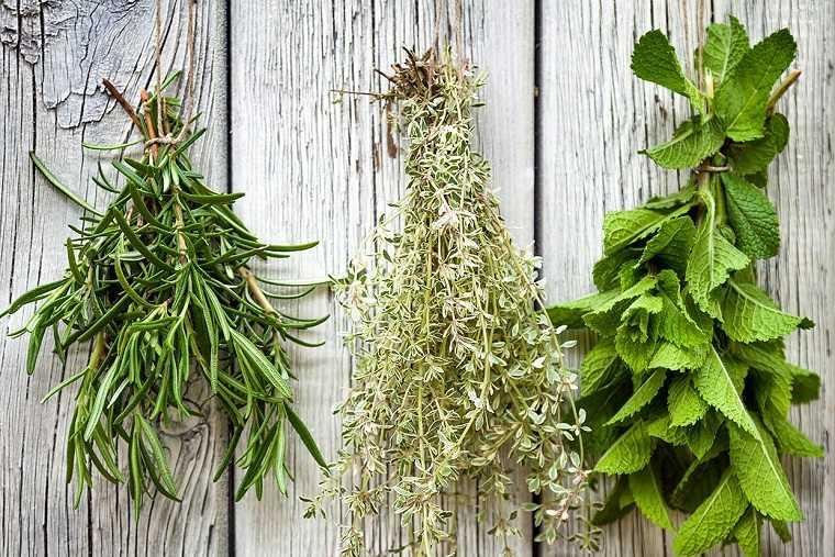 hierbas-huesos-ideas-salud-bienestar