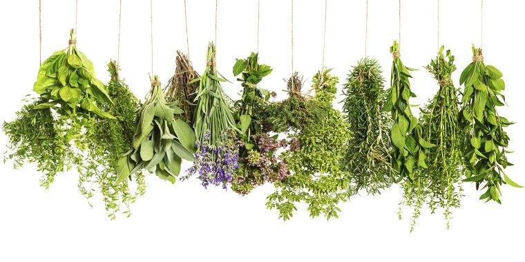 hierbas medicinales-salud-bienestar-ideas
