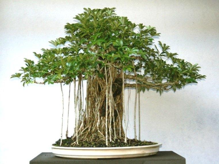 impresionantes-formas-exteriores-planta