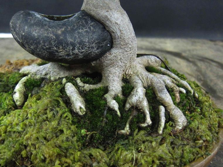 increibles-formas-siembra-bonsai