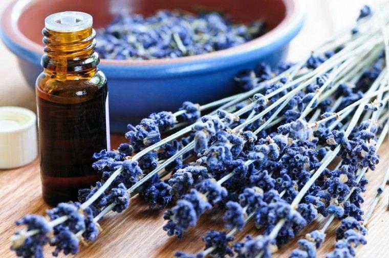 lavanda-flor-aceite-curativo-ideas