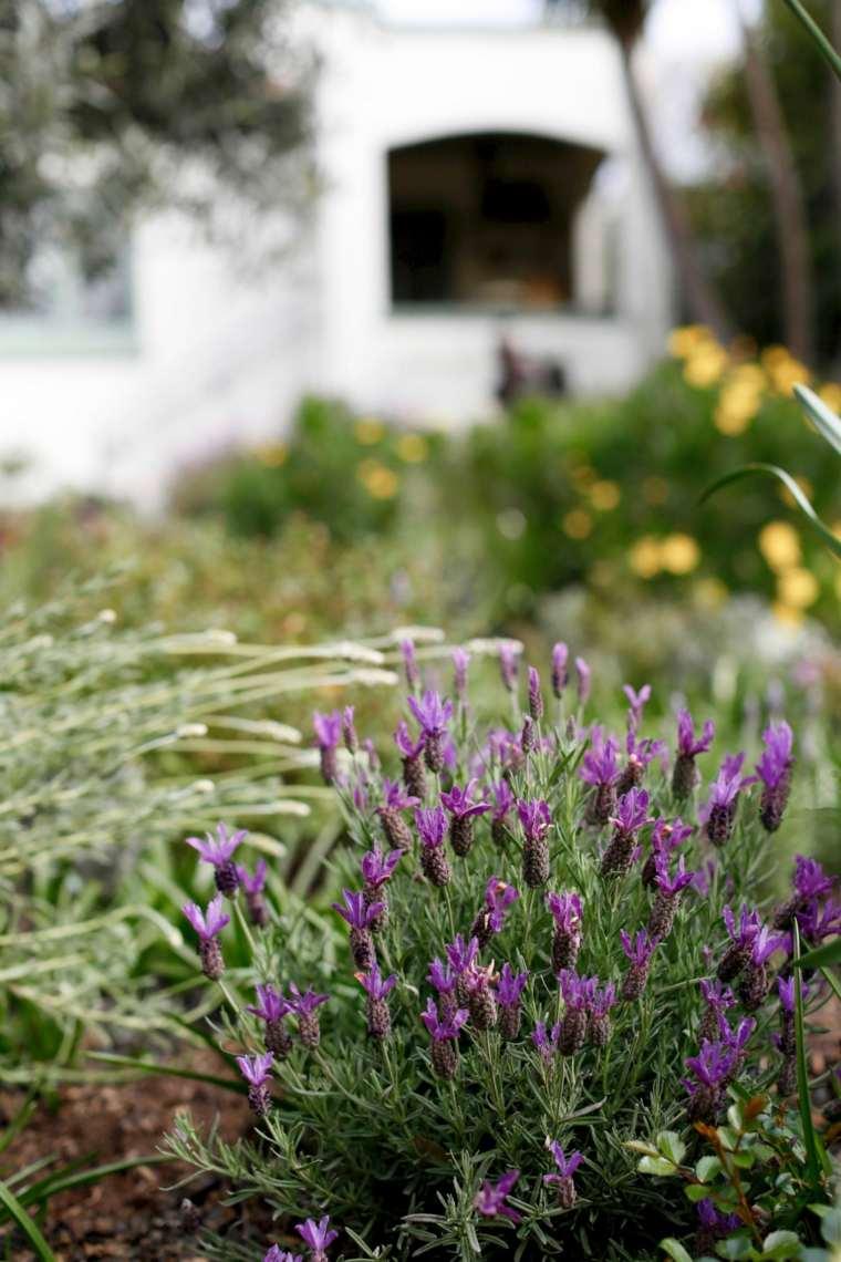 lavanda-jardin-pequena-opciones-ideas