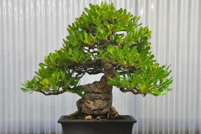 muestra-bonsai-interiores-elegantes