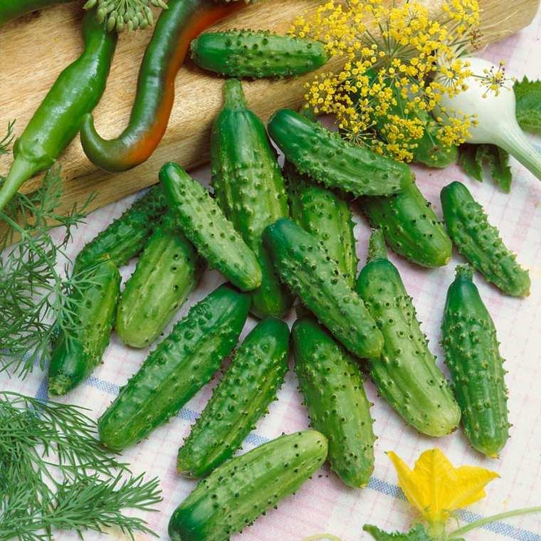 El pepino contiene antioxidantes