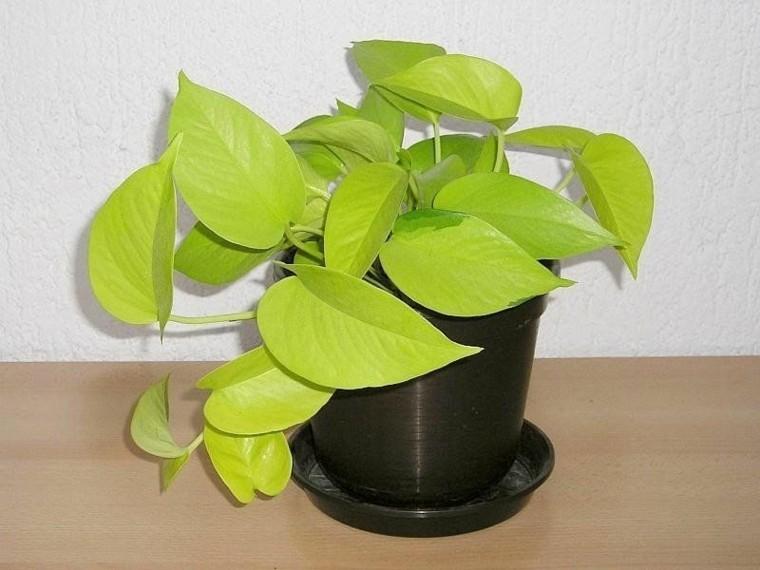 plantas aromaticas-resistentes-potus