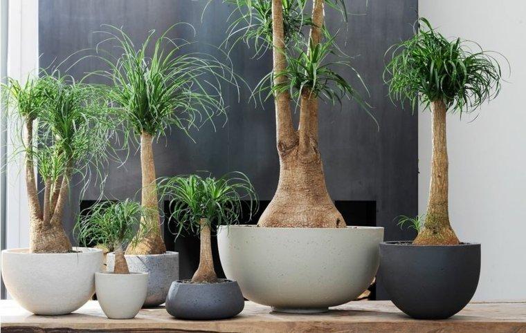 plantas de interior-bonitas-resistentes
