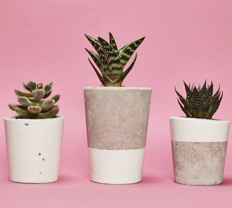 plantas de interior-cactus