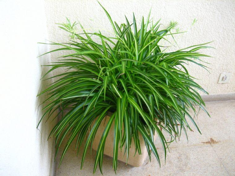 plantas de interior-resistentes-cintas