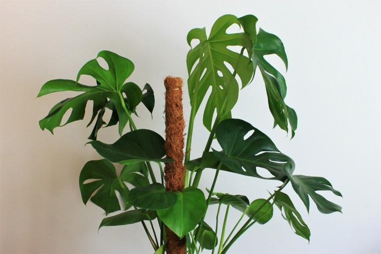 plantas de interiores-resistentes-costilla-de-adan