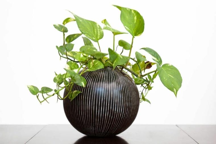 plantas de sombra para interiores-potus