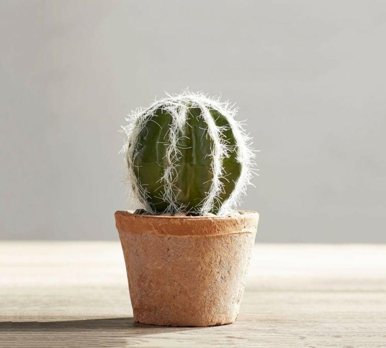 plantas para oficina-resistentes-cactus