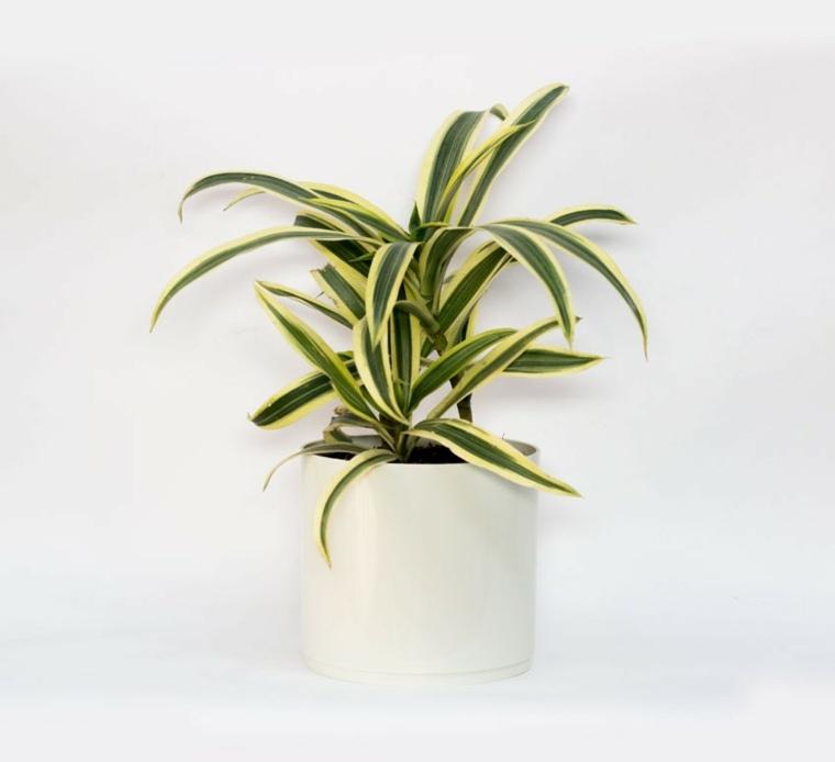 plantas para oficina-resistentes-cintas