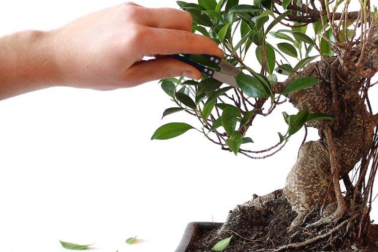 poda-ramas-pequenas-bonsai