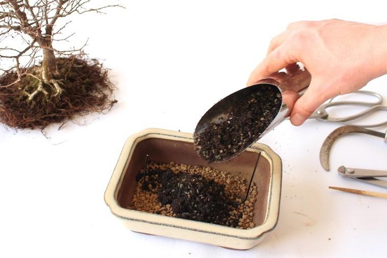 preparacion-sustrato-siembra-bonsai