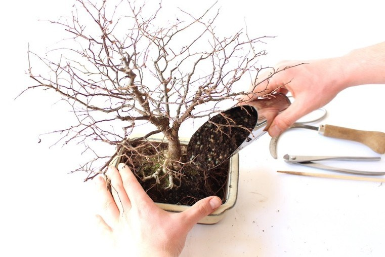 replantando-planta-pequena-natural