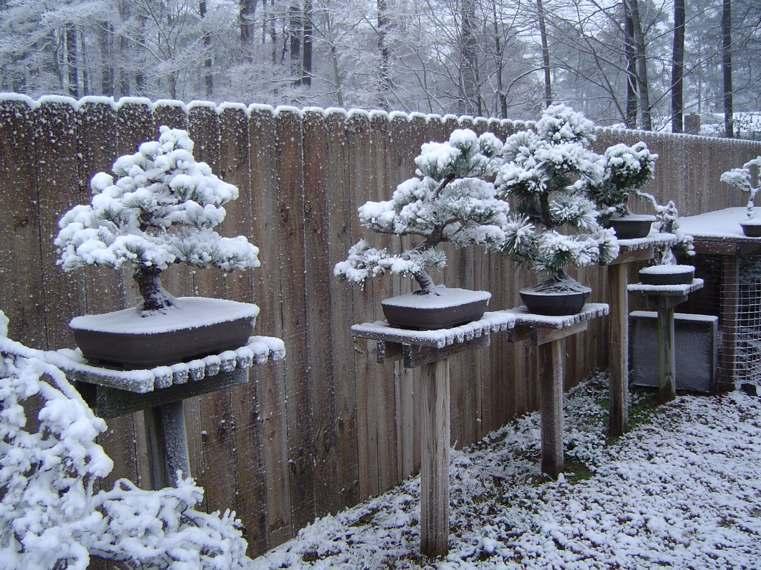 resistencia-frio-exteriores-plantas