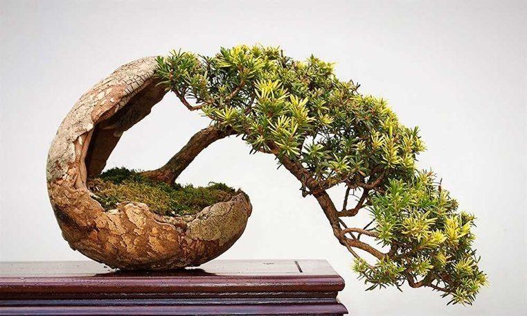 roca-vasija-piedra-natural