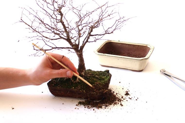 separando-tierra-raices-plantas