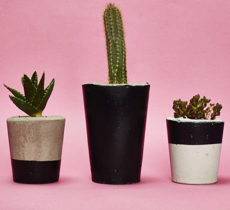 tipos de plantas-interiores-cactus