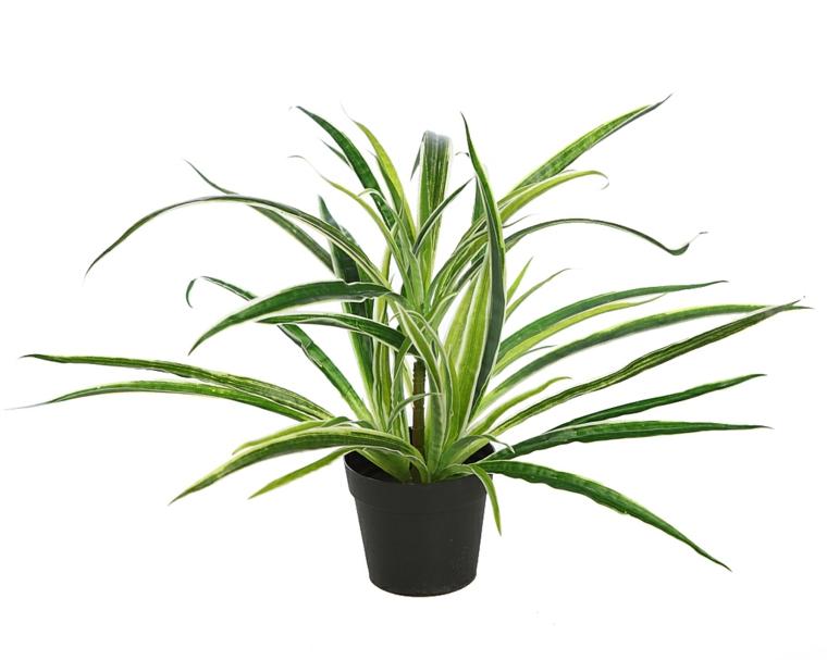 tipos de plantas-resistentes-cintas