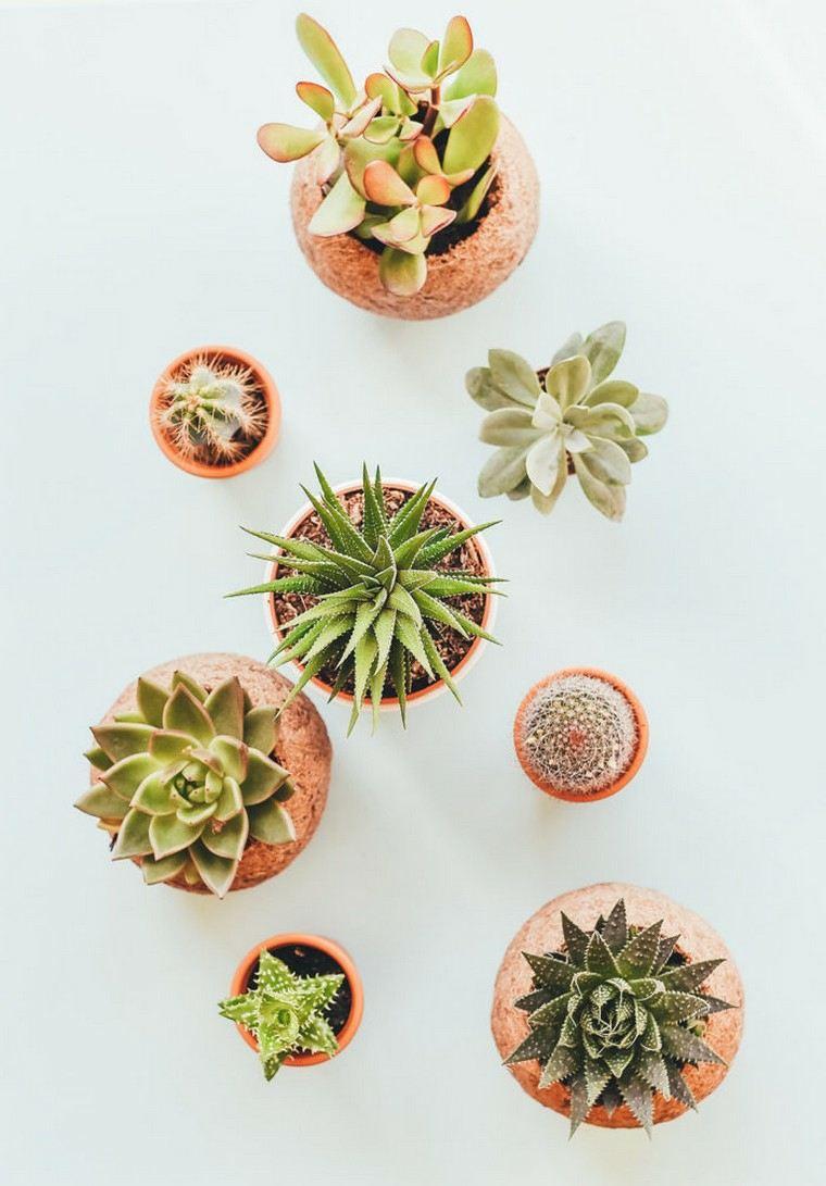 casa-plantas-suculentas-decoracion-ideas