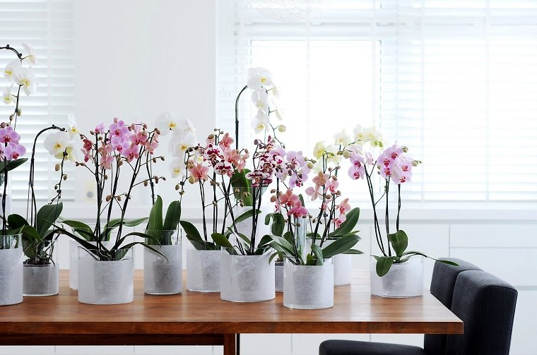 como-cuidar-una-orquidea-bellas-flores