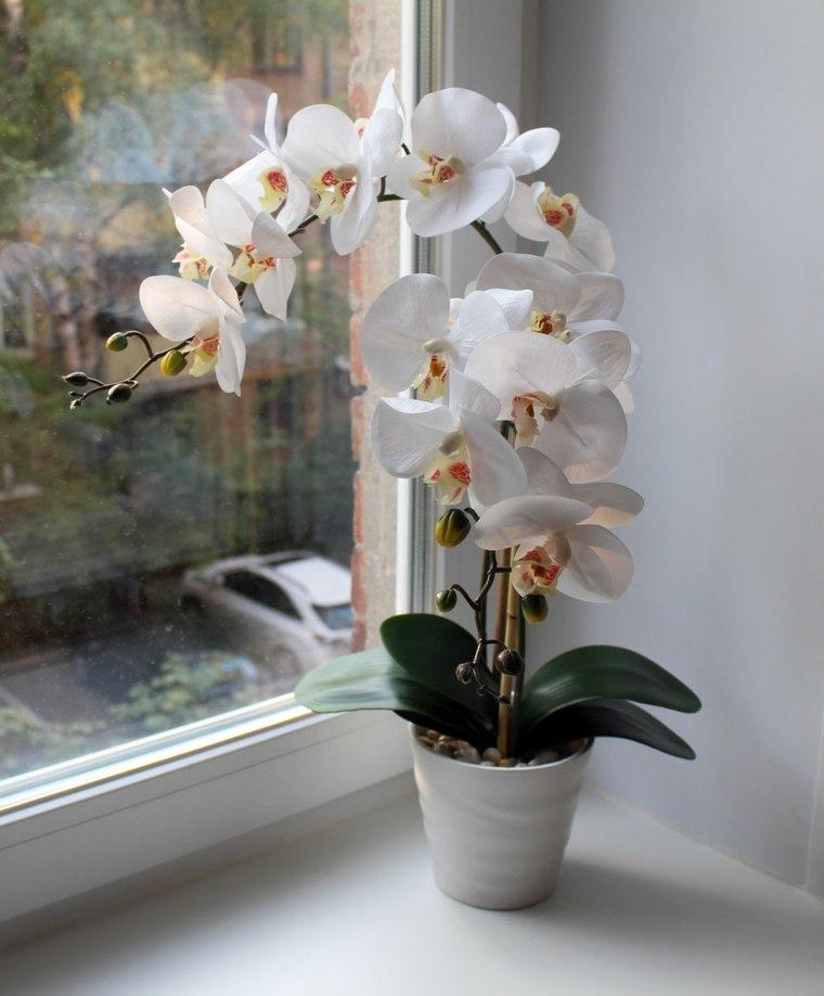 como-cuidar-una-orquidea-flor-blanca-bella