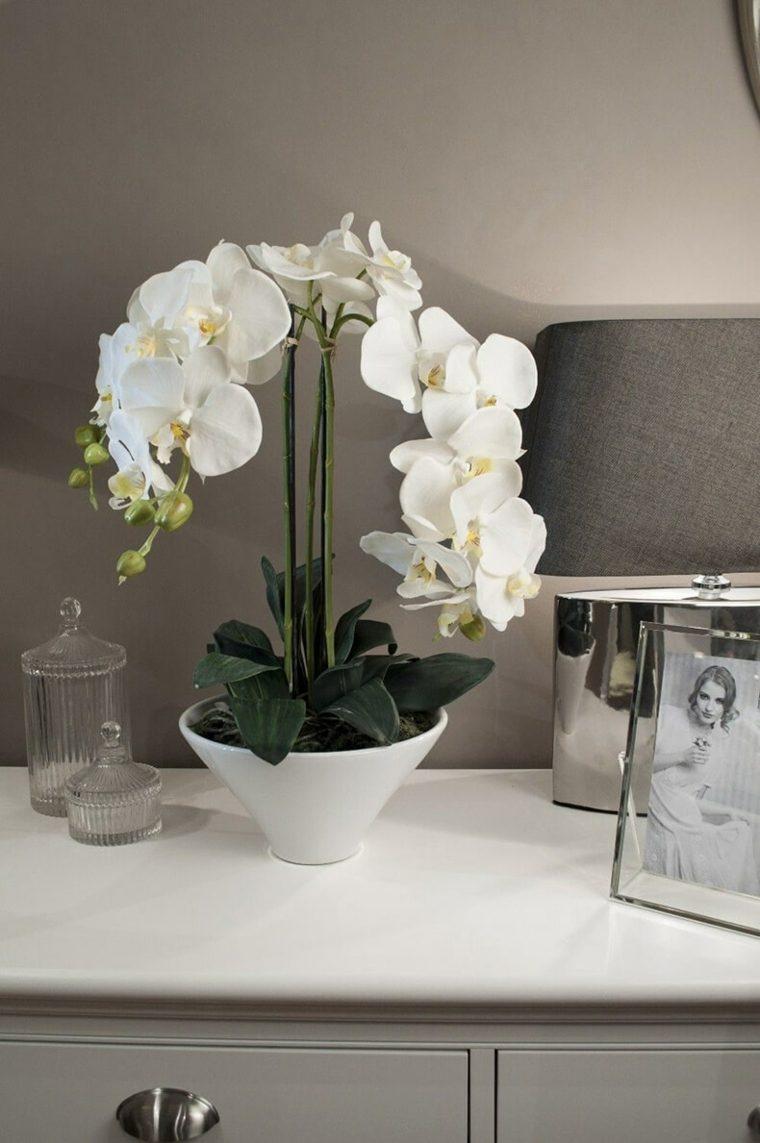 como-cuidar-una-orquidea-flor-blanca-ideas