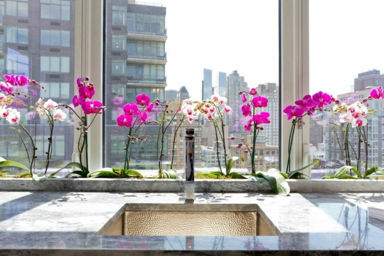 como-cuidar-una-orquidea-flor-blanca-rosa