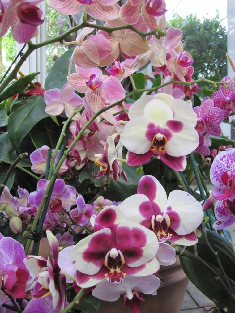 cómo cuidar una orquídea-flor-consejos