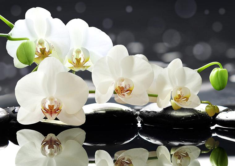 cómo cuidar una orquídea-flor-ideas