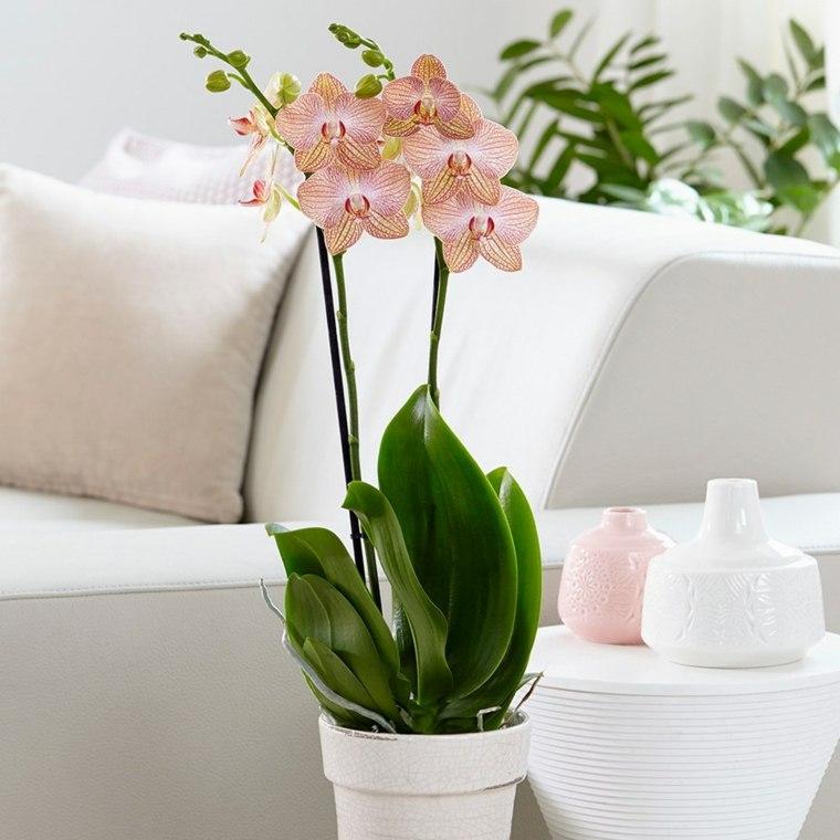 cómo cuidar una orquídea-flor-interior-casa
