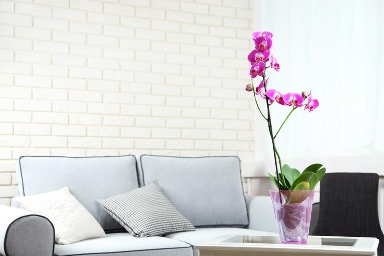 cómo cuidar una orquídea-flor-rosa