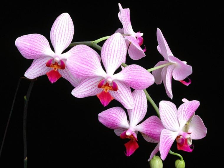 como-cuidar-una-orquidea-flor