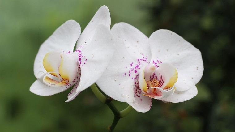 cómo cuidar una orquídea flores-ideas