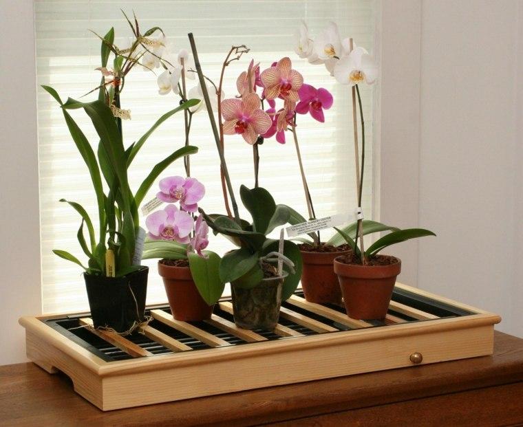 cómo cuidar una orquídea-opciones-casa