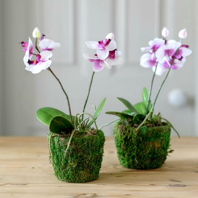 cómo cuidar una orquídea opciones-ideas