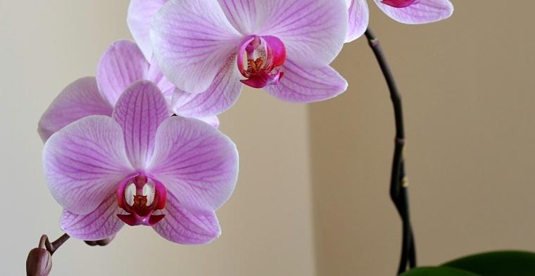 consejos-cuidado-orquidea-flor