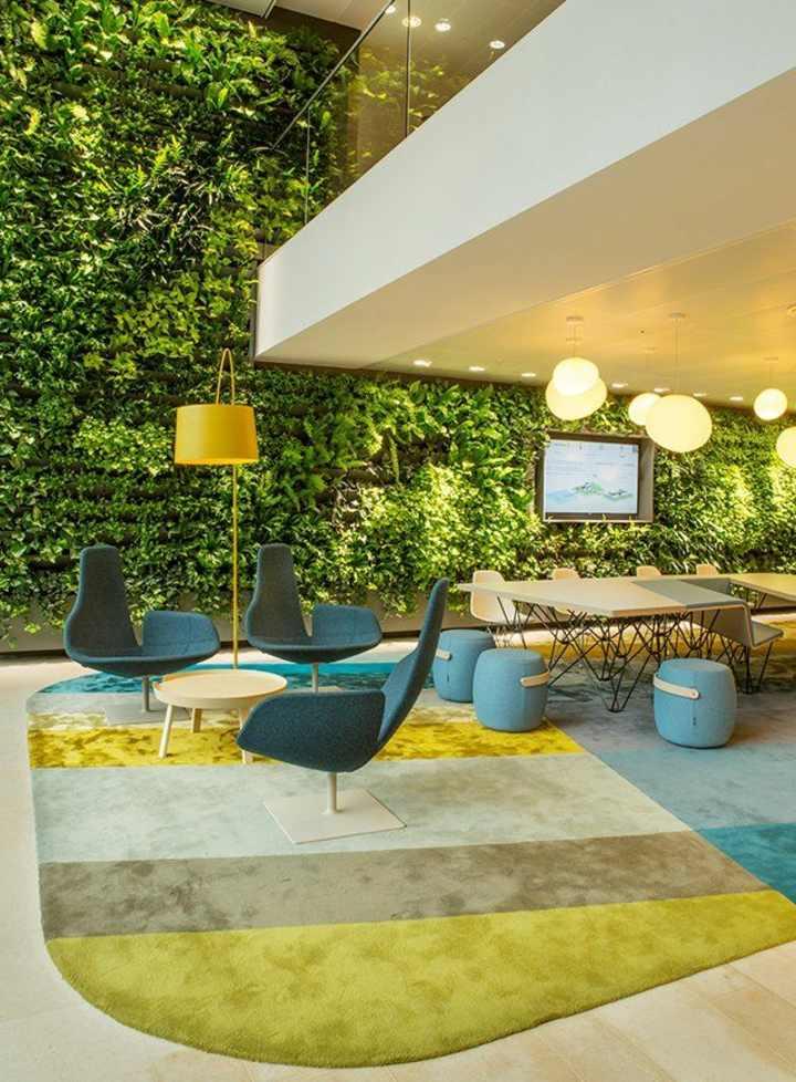 contrastes-colores-plantas-alfombras