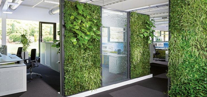 cristales-plantas-verdes-interiores
